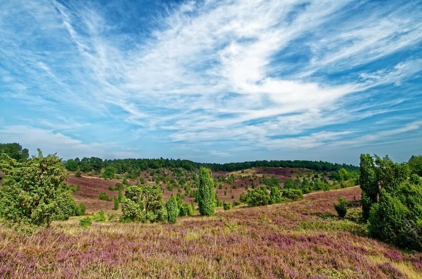 Lüneburger Heide